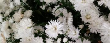 Resenha – Paixões Gregas: Adrenalina do Amor